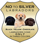 no to silver labradors!